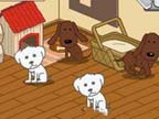Play Animal Shelter on Games440.COM
